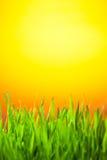 заход солнца зеленого цвета травы Стоковая Фотография RF