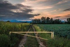 Заход солнца изолировал дорогу в середине поля в brianza Монцы к нигде стоковое фото rf