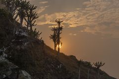 Заход солнца и африканский кактус, в Cabo Ledo, Ангола стоковое фото rf