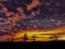 Заход солнца и болота внутри стоковая фотография