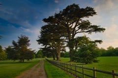 Заход солнца и дерево стоковая фотография