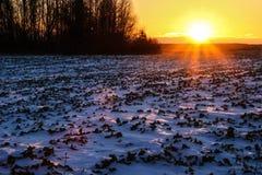 Заход солнца и яркое солнце зимы над лесом стоковые изображения
