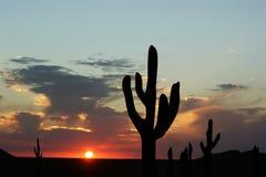 заход солнца кактуса Стоковые Фотографии RF