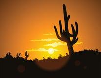 заход солнца кактуса Стоковое Изображение RF