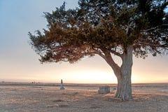 заход солнца кладбища кедра Стоковое Изображение RF
