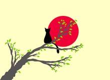 заход солнца кота Стоковые Фото