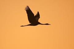 заход солнца крана Стоковая Фотография