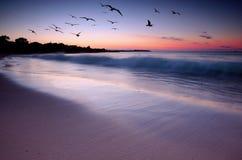 заход солнца красотки Стоковые Изображения