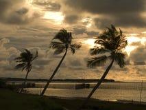 заход солнца ладоней кокоса Стоковое фото RF