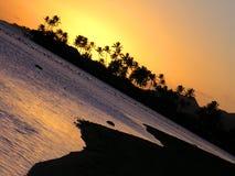 заход солнца ладоней океана Гавайских островов стоковые изображения rf