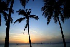 заход солнца ладоней тропический Стоковое Изображение RF