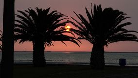 заход солнца ладоней стоковое изображение rf