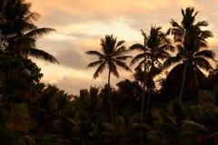 заход солнца ладоней Стоковые Изображения