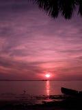 заход солнца ладони гавани Стоковое фото RF