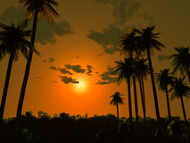 заход солнца ладони пляжа бесплатная иллюстрация