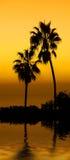 заход солнца ладони Стоковая Фотография RF