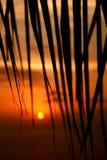 заход солнца ладони Стоковые Изображения