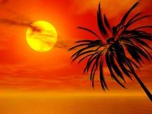 заход солнца ладони Стоковое Фото