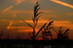 Заход солнца ландшафта фантастический на солнечных лучах пшеничного поля ярко светит стоковое изображение