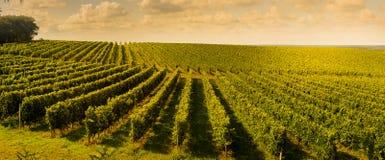 Заход солнца, ландшафт, Бордо Wineyard, Франция Стоковое Фото
