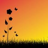 заход солнца лета предпосылки Стоковое фото RF