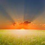 заход солнца лета Стоковая Фотография RF