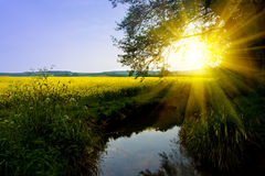 заход солнца лета Стоковые Фото
