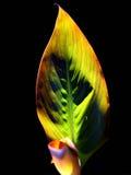 заход солнца листьев Стоковые Фотографии RF