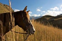 заход солнца лошадей Африки южный Стоковые Фото