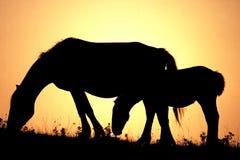 заход солнца лошадей Стоковое Изображение RF