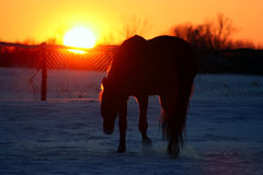 заход солнца лошади Стоковые Изображения