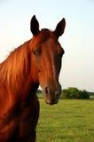 заход солнца лошади Стоковое Изображение