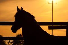 заход солнца лошади Стоковые Изображения RF