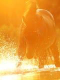 заход солнца лошади plaeing Стоковое Изображение RF