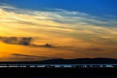 заход солнца лужка лошади Стоковая Фотография