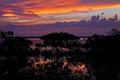 заход солнца мангровы Стоковое Изображение