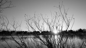 Заход солнца между ветвями стоковое изображение