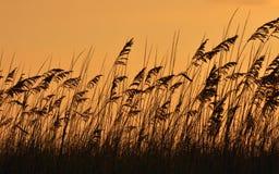 заход солнца моря овса Стоковые Изображения RF