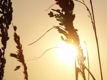 заход солнца моря овсов Стоковые Изображения
