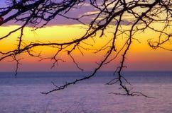 Заход солнца моря предпосылки силуэта дерева Стоковые Изображения