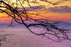 Заход солнца моря предпосылки силуэта дерева Стоковое Изображение RF