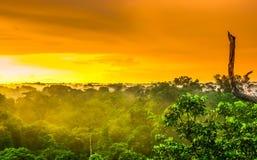 Заход солнца над деревьями дождевого леса в Бразилии Стоковое Изображение RF