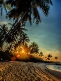 Заход солнца над ладонями кокоса стоковое фото rf