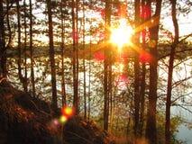 Заход солнца над озером с соснами Стоковое Изображение RF