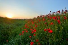 Заход солнца над полем мака стоковые изображения