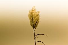 Заход солнца над полем травы Стоковое Изображение RF