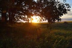 Заход солнца над полем цветка стоковое изображение rf