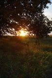 Заход солнца над полем цветка стоковые изображения rf