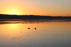 Заход солнца над фьордом Вайле Утки плавая в воде стоковое фото
