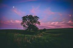 Заход солнца над эпичным деревом в Midwest стоковые изображения rf
